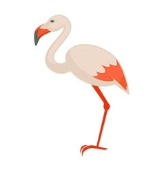 pink flamingo Exotic bird isolated vector image