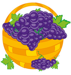 Basket with grape vector