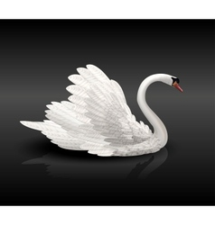 White swan on black water vector
