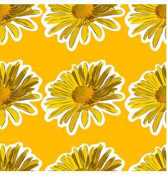 chamomile flower seamless background vector image