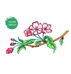 Appleflower sketch color-02 vector