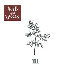 Dill sketch hand drawing dill vector