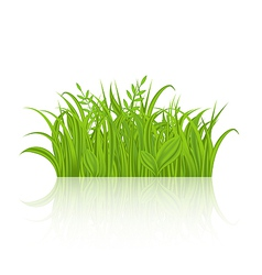 Green grass with reflection isolated on white vector image vector image