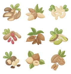 set of nuts vector image vector image