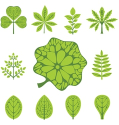 different types of leaves vector image vector image