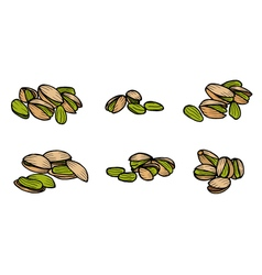 Pistachio nuts and kernels vector