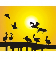 pelican silhouettes vector image