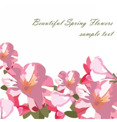 Pink flowers bouquet card isolated vector