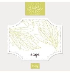 Product sticker with hand drawn sage leaves spicy vector