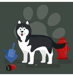 Dog collars and lead for walking transporting vector image vector image