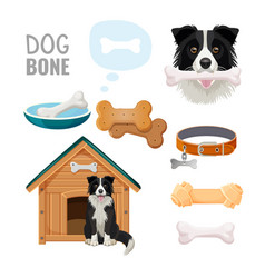dog bone promotional poster of zoo market goods vector image