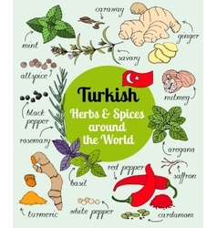 Turkish herbs and spices vector