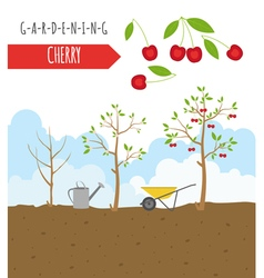 Gardening work farming cherry graphic template vector