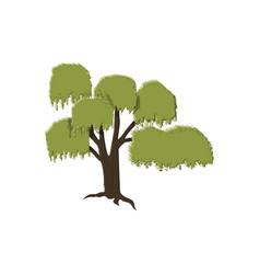 Willow tree isolated on white vector
