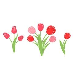 Bunch of flowers tulip vector