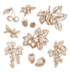 Forest berries and fruits sketch icons vector