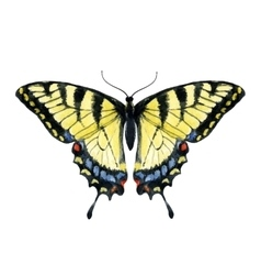 Watercolor hand drawn butterfly vector image vector image