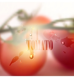 Fresh blurred food background with tomatoes water vector