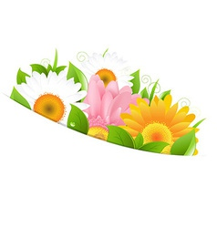 Flower Gerber And Leaves vector image vector image