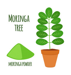 Moringa vegetarian superfood healthy nutrition vector