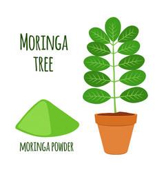 moringa vegetarian superfood healthy nutrition vector image