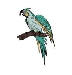 doodle parrot vector image