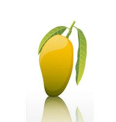 The-sweet-mango-fruit-isolated-on-white-background vector image