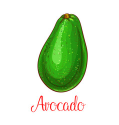 Avocado sketch icon of tropical fruit vector