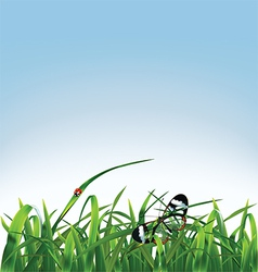 Grass butterfly and ladybug vector image vector image