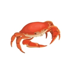 Red crab shellfish realistic vector
