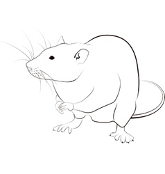 Rat sketch vector