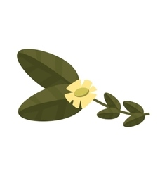Jasmine blossom icon vector