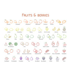 Outline colorful linear web icon set - fruit amp vector