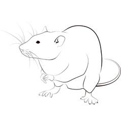 rat sketch vector image