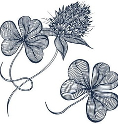 Drawing clover flower vector