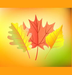 autumn yellow leaves vector image vector image