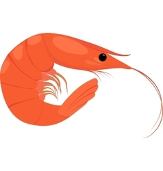 Cooked shrimp on white background vector