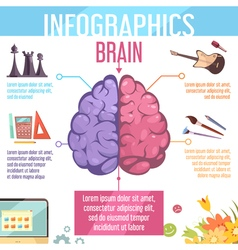 Brain cerebral hemispheres functions infographic vector
