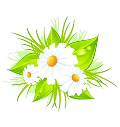 Bouquet daisies green vector