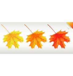 autumnal discount vector image vector image
