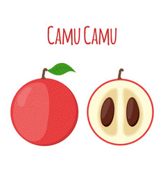 Superfood camu camu in flat style red camu berry vector