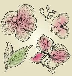 Orchid design elements vector
