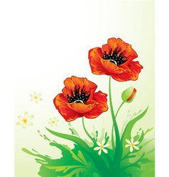 Natural background with poppy vector image vector image