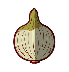 white background with onion in closeup with thick vector image vector image