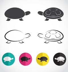 group of turtle vector image vector image