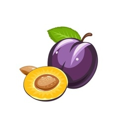 Plum Ripe juicy fruit vector image