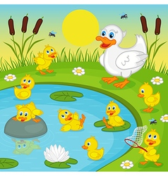 ducklings with mother duck playing in lake vector image