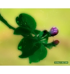 blooming apple vector image
