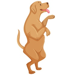 Cute dog standing on two legs vector