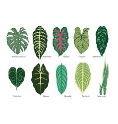 exotic leaves set color vector image vector image